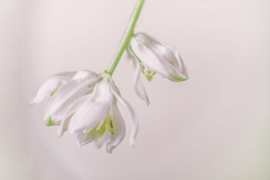 bloemetjes-wit-trosje
