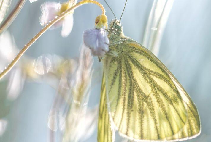 sunny-days-vlinder