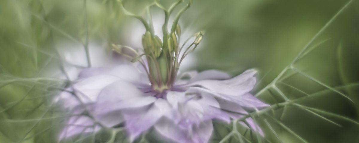 juffertje-groen-bloem