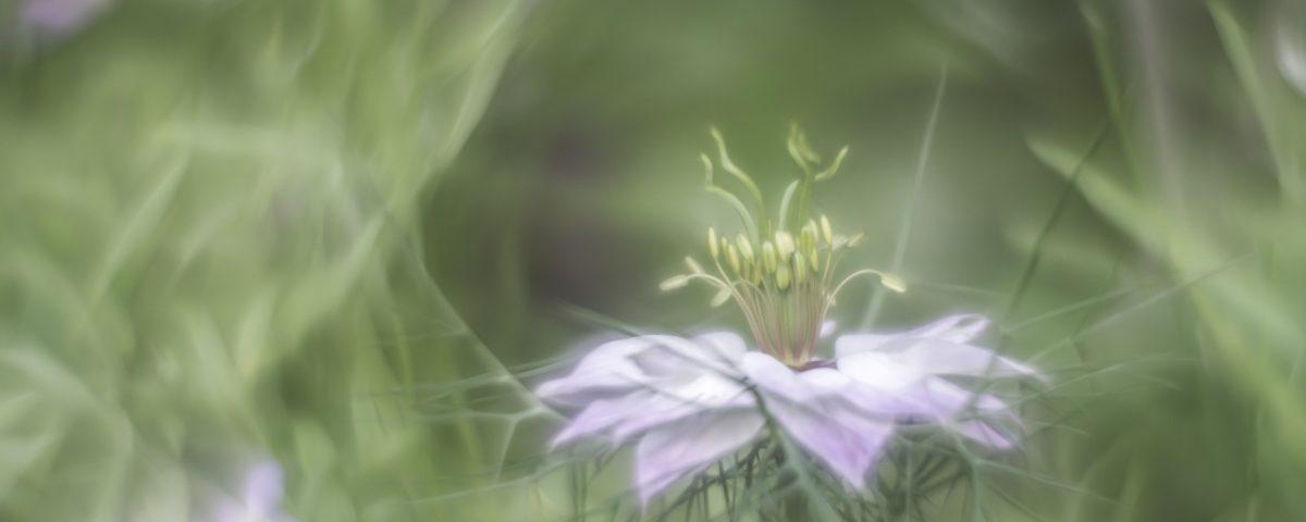 dreamy-flower-juffertje