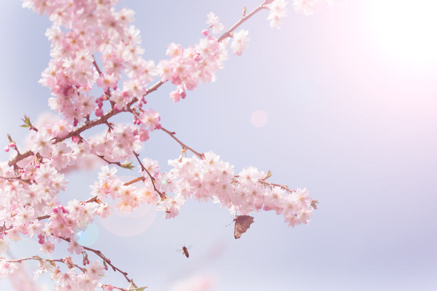 happy- spring-bloesem-blossom