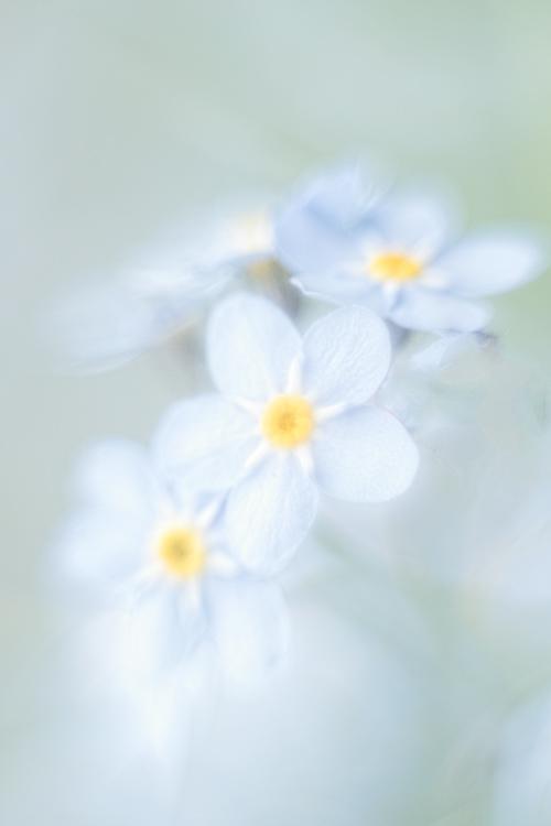 liefelijk-zacht-pastel-licht-bloemen