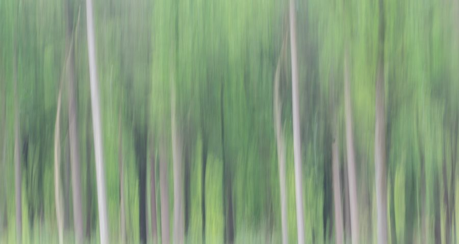 bewogen-bos-ICM-abstract-