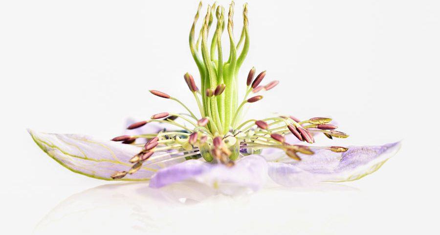 juffertje-groen-macro-bloem-aquarel