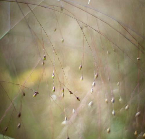 gras-natuur-helios