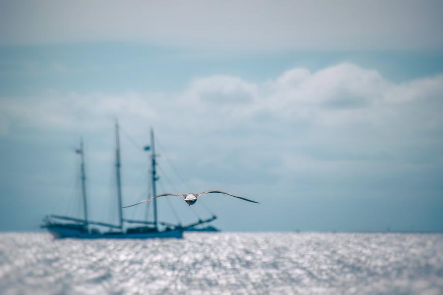 meeuw -zeilboot-zee-zomer