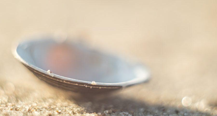 schelp-meer-zand-strand