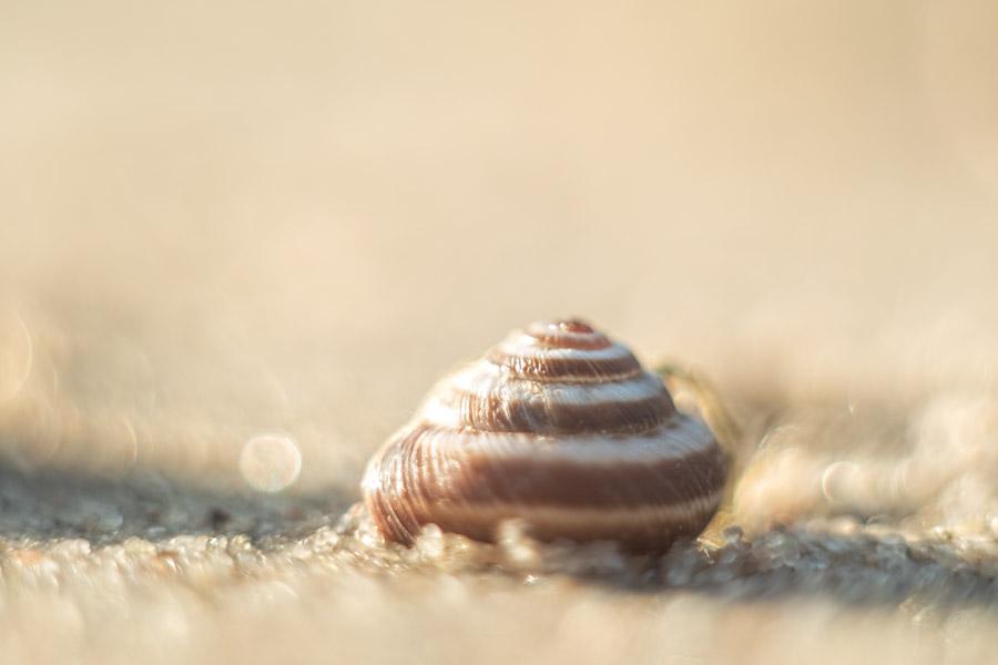 schelp-strand-meer