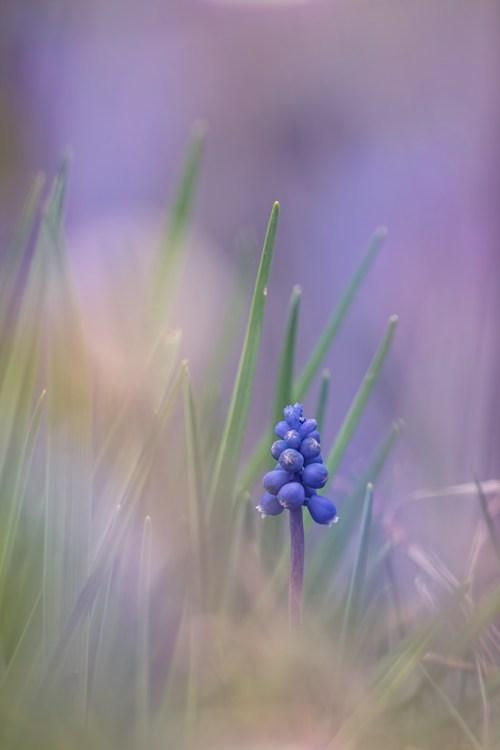 natuurfotografie-lente-macro-tuin