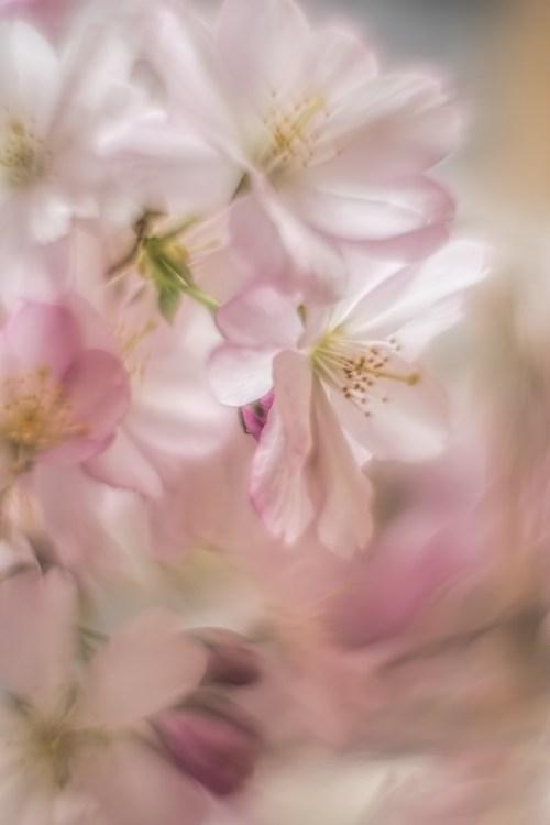 pastel-macro-bloesem