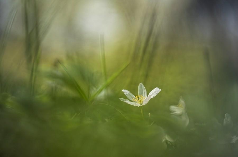 bosanemoon-macrofotografie-bloem