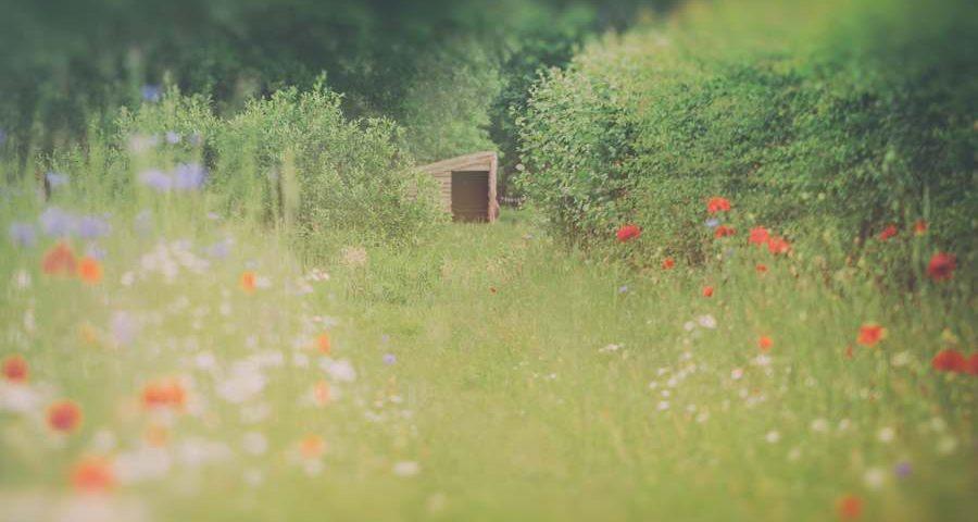 veldschuur-veldbloemen-weiland