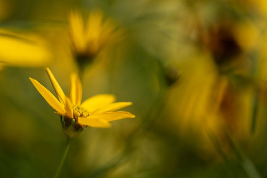 summer-macro-flower