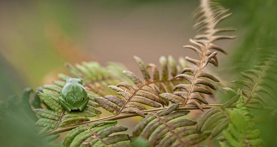 boomkikker-kikker-natuur