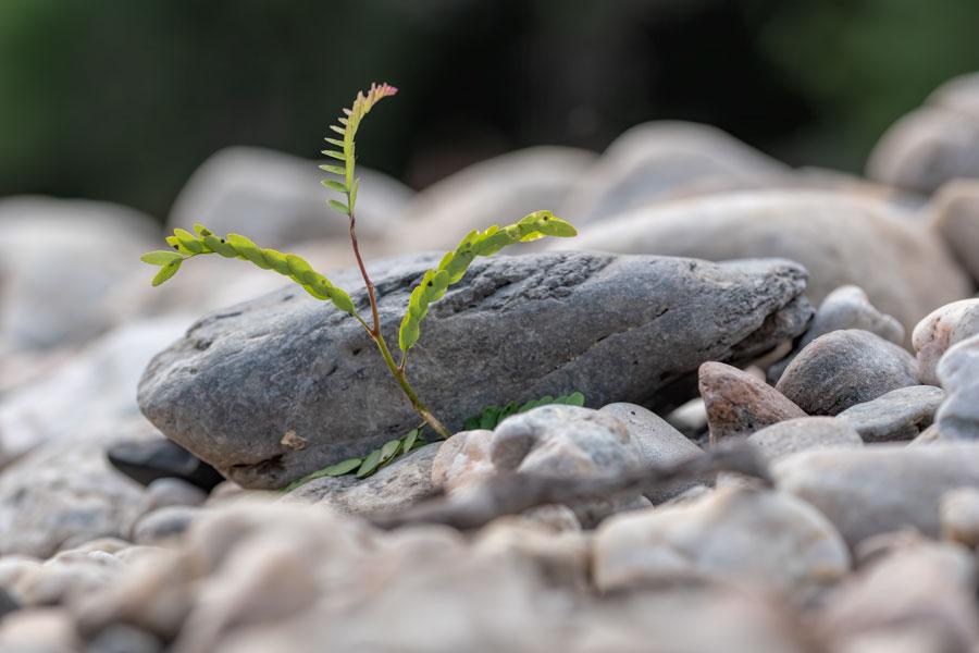 stenen-plantje-macro