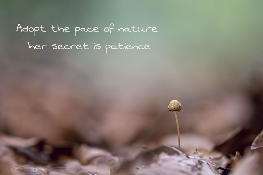 patience-foto-tekst-paddenstoel