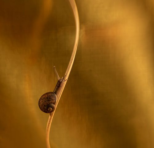 gouden-slakje-abstract-macro