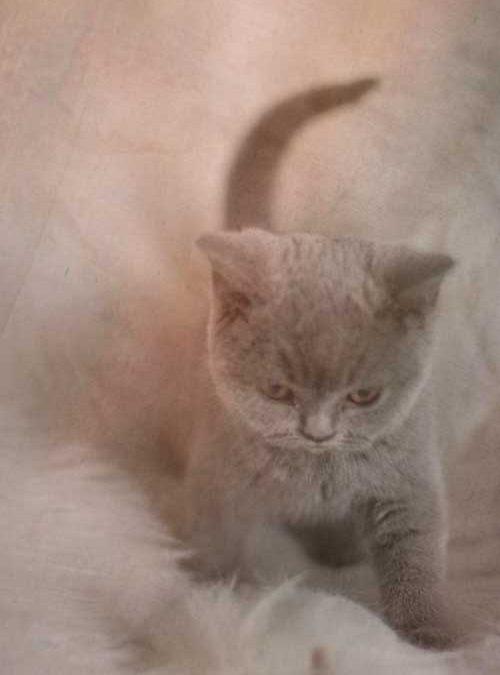 meervoudige-belichting-kitten