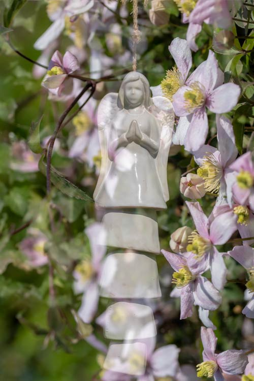 Engel-windgong-clematis-tuin