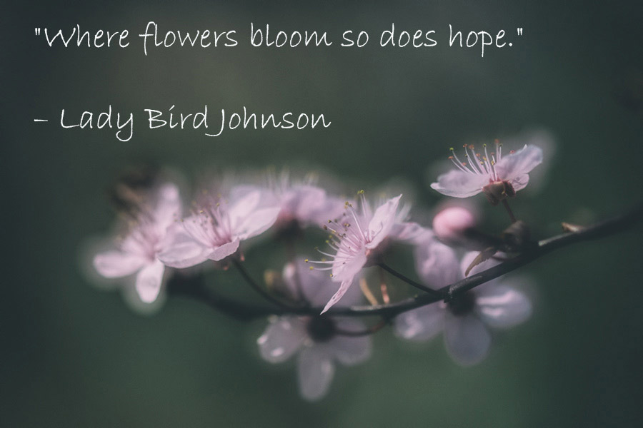 lady-bird-johnson-flowers