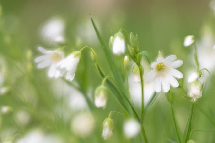weide-bloemen-meervoudige-belichting