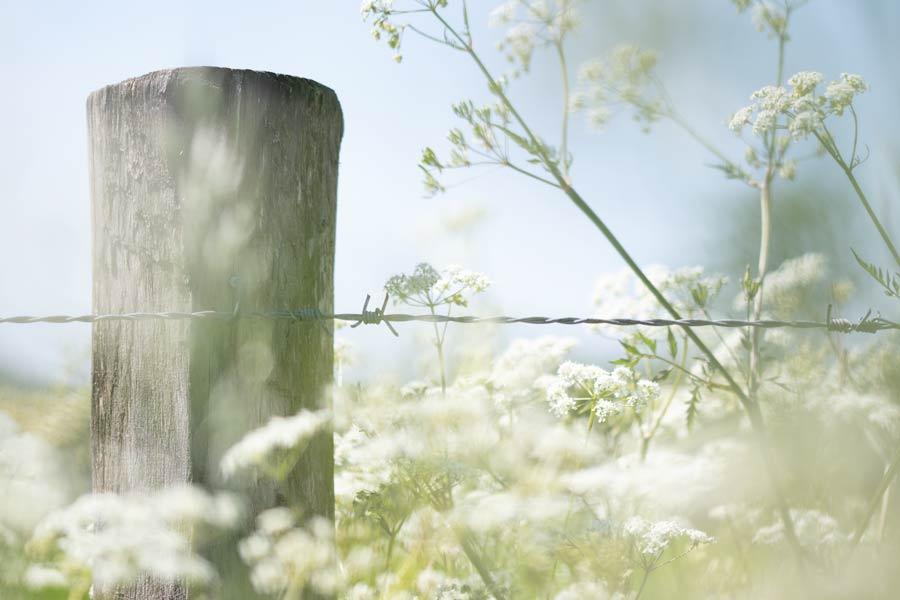 fluitenkruid-landschap-natuurfotografie